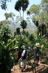 Coffee farm in Costa rica (credit: Annelies Vos)