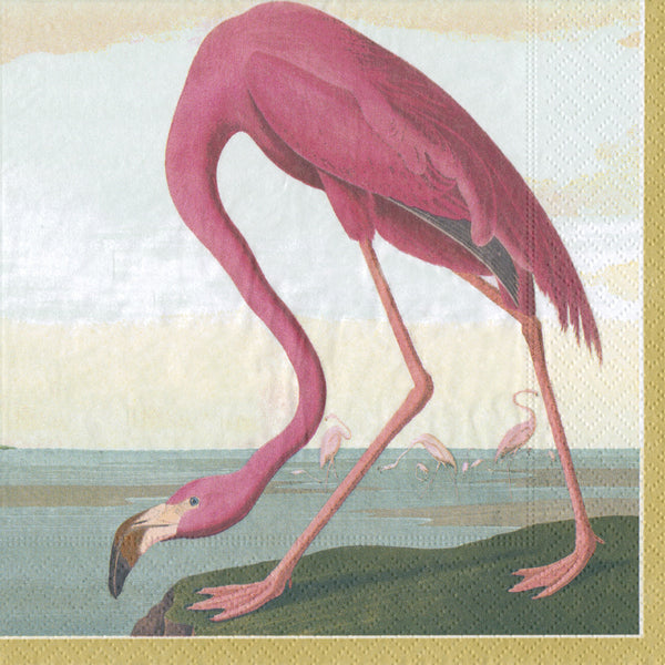 American Flamingo taken from an 1832 illustration by the artist John James Audubon whilst he was sailing around Florida and Key West.