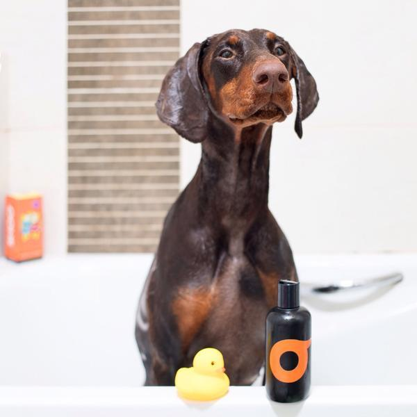 SHOO Natural Dog Shampoo (Organic Cedar-Wood) expired on 03/19 - Vegan Concept