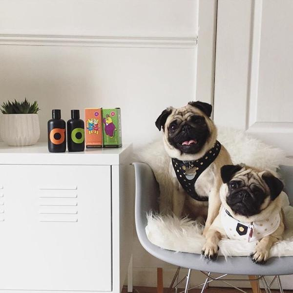 SHOO Natural Dog Shampoo (Organic Wild-Orange) expired on 03/19 - SHOO | Vegan Concept Hong Kong