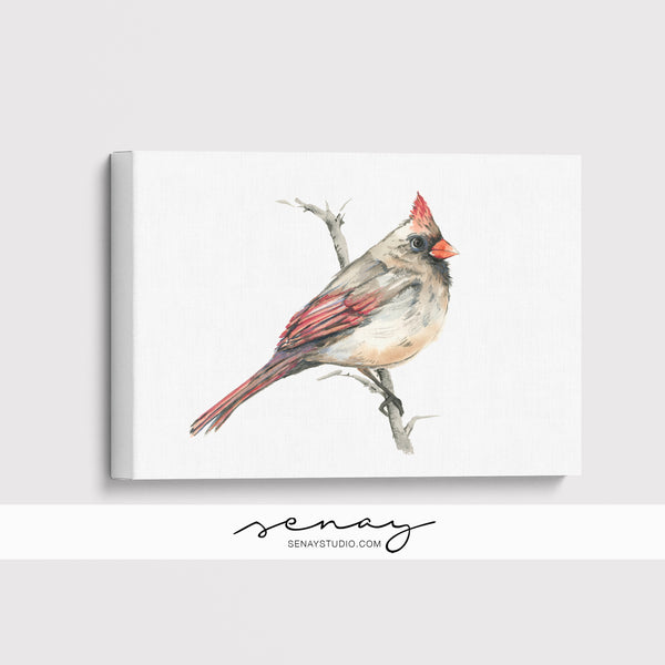 Female Cardinal Bird giclée canvas (READY TO HANG)