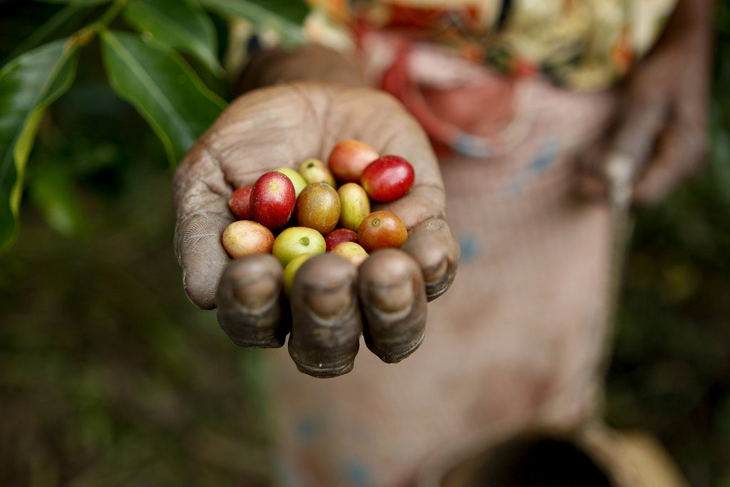Sustainable Ways to Drink Coffee in Honor of Earth Day