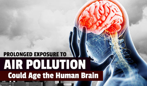 Air Pollution Damages The Human Brain Image-Clean Air Plus