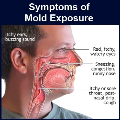 Mold Exposure Image-Clean Air Plus