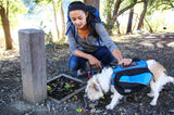 Dogs on the Go: Eco Style