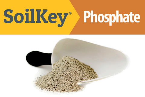 Rock Phosphate