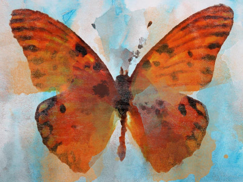 "Butterfly 1946 Canvas Print by Irena Orlov 20X16"" ,large butterfly canvas print,"