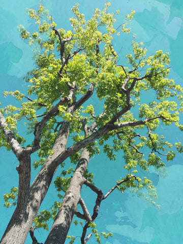 Large Landscape Tree, forest pictures, landscape art,  green tree,tree art, spri