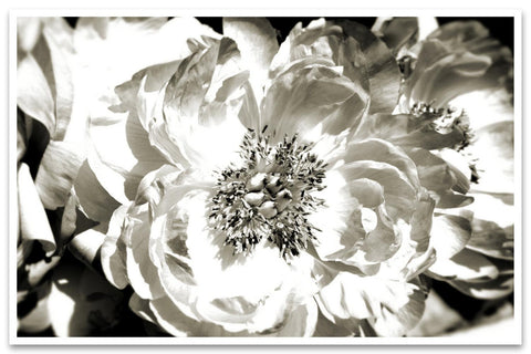 White Peony. Canvas Print by Irena Orlov
