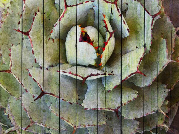 Agave. Canvas Print by Irena Orlov 24x36""
