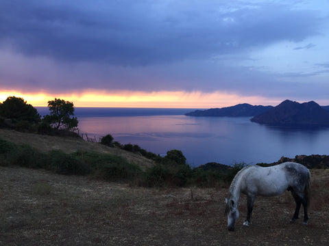 Corsica coast with horse