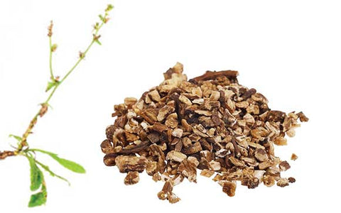 prebiotic fiber chicory root