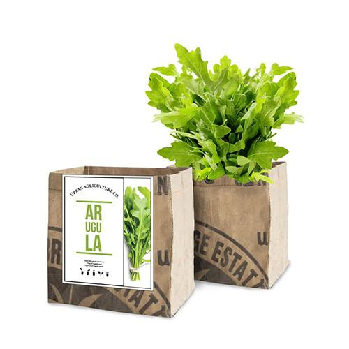 Arugula Organic Planter by Urban Agriculture Co.