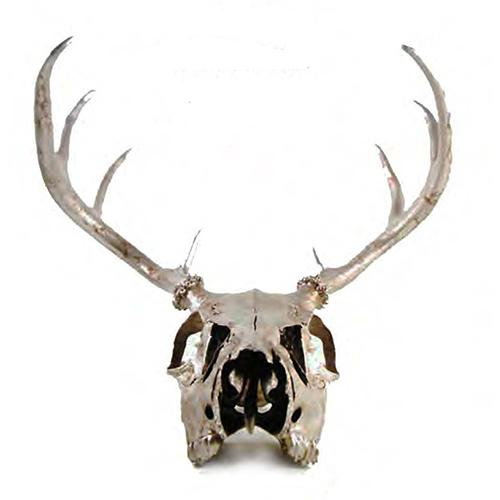 Silver or Gold Leaf Deer Skull with Antlers by Lisa Carrier Designs