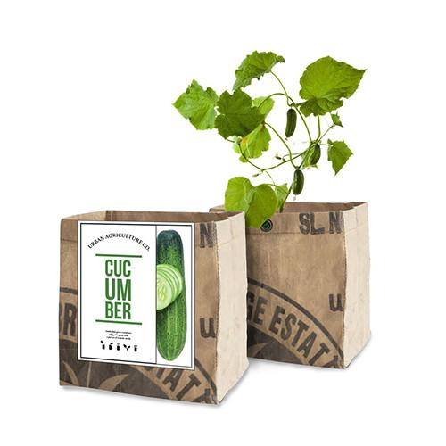 Cucumbers Organic Planter by Urban Agriculture Co.