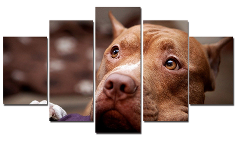 Poster - Pit Bull 1