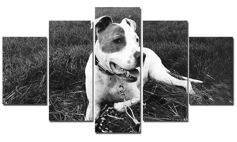Poster - My Pit Bull