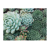 Succulent Garden 2-Sided Puzzle
