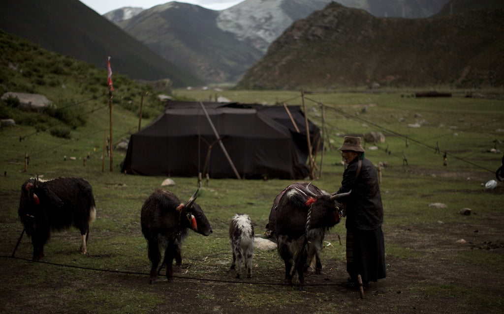 Summer herding camp for Tibetan nomads