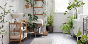 How to Easily Decorate Your Bathroom with Plants