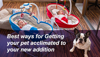 Best ways for getting your pet acclimated to your new addition