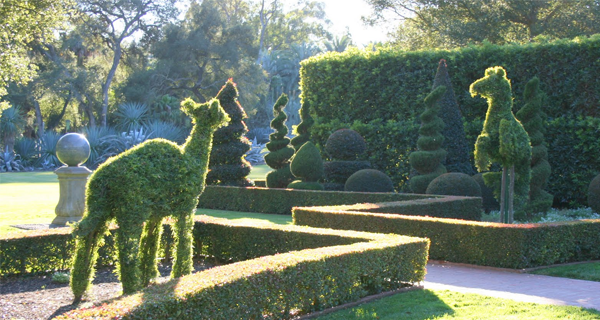 Love Topiaries? Grow Your Own With These EASY Steps