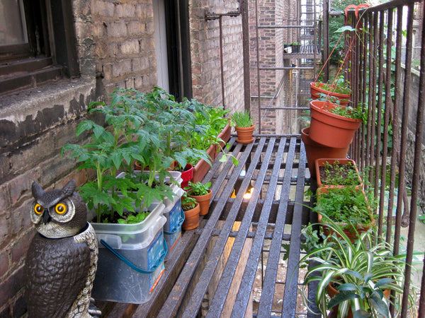 Terrace Gardening Pitfalls (and How to Avoid Them)
