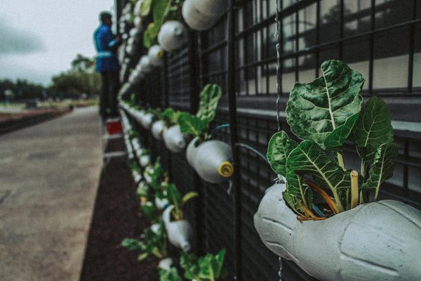 Container Gardening: How to Grow Vegetables in the City