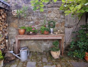 Container Gardening: Feast Your Eyes