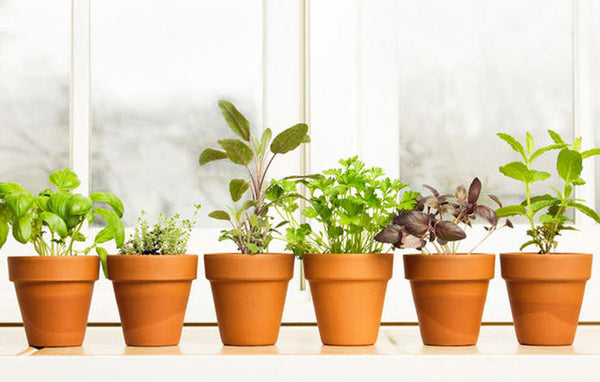 Your Winter Indoor Herb Garden