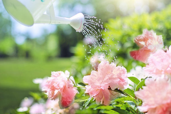 5 Essential Watering Tips for Gardeners