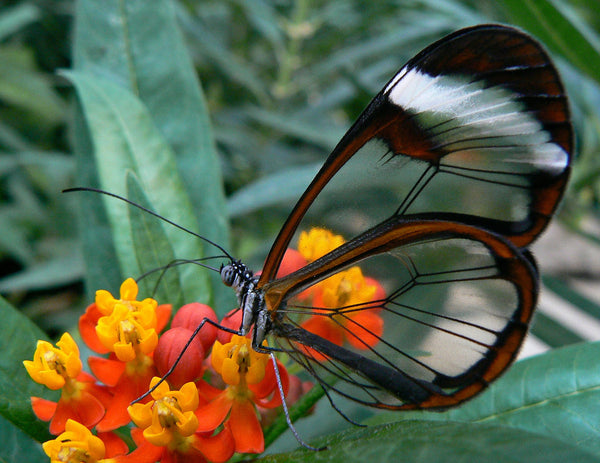 The Life Cycle of a Butterfly (and What Makes it Choose YOUR Garden)