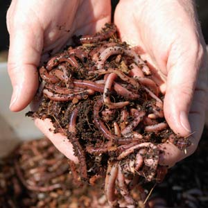 Your Essential Vermicomposting Guide