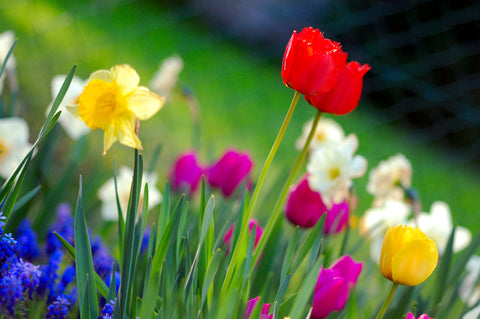 Your Spring Gardening Checklist