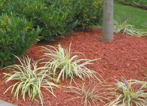 Mulch can be a life (and plant) saver.