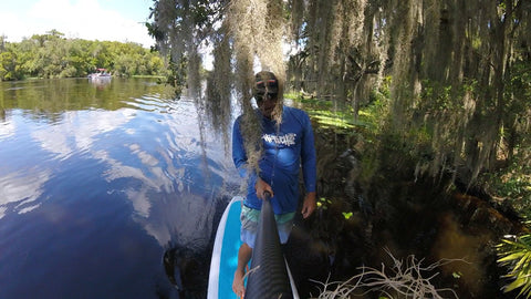 Freshwater and Old Friends on Florida's Blue Spring Estuary Ronnie Ayres KM Hawaii Cypruss hanging down