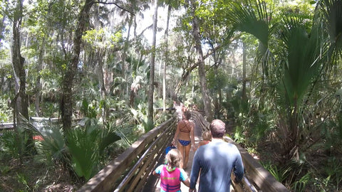 Freshwater and Old Friends on Florida's Blue Spring Estuary Ronnie Ayres boardwalk walking through the CYpruss trees