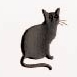 Yamazakura - Cashico - embossed card - black cat