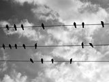 Birds On A Wire Vinyl Print