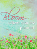 Bloom Where You Are Planted - Vinyl Print