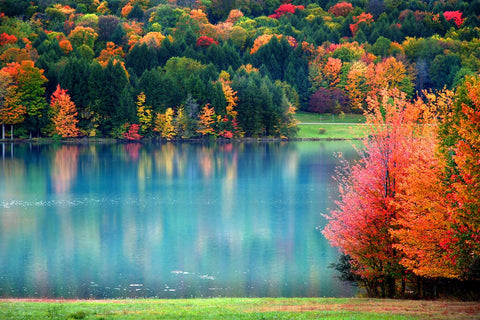 Fall On The Lake Landscape Vinyl Print