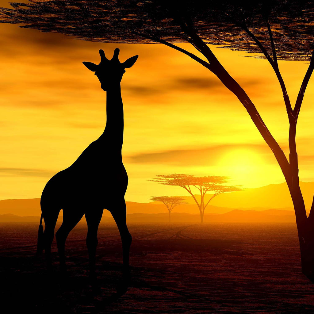 African Giraffe In Safari Sunset Vinyl Print