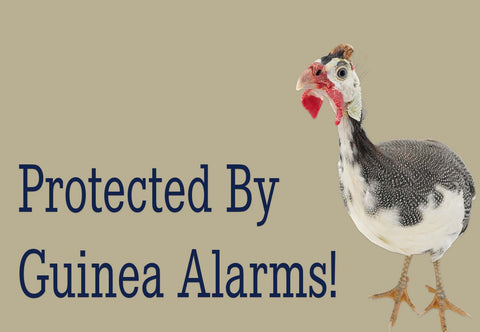 Protected By Guinea Alarm Welcome Mat
