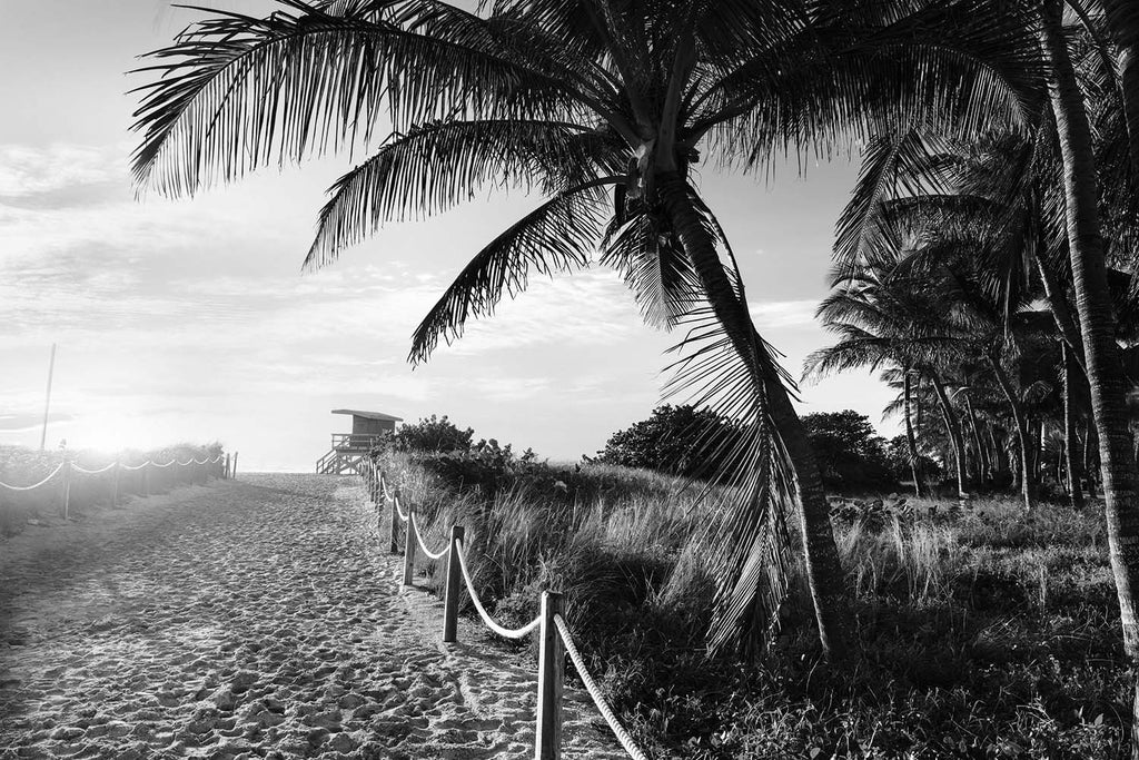 Miami Sunset Black & White Vinyl Print