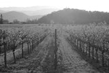 Napa Valley Vineyeard Black & White Vinyl Print