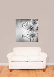 Black & White Orchid Flowers Vinyl Print