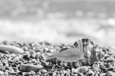 Seashell on Pebble Beach Black & White Vinyl Print