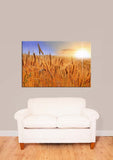 Wheat Field In The Sunset Vinyl Print