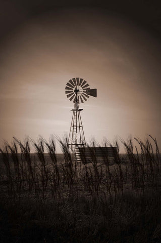 Windmill In The Wheat Field Vinyl Print