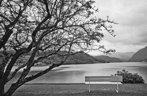 Black & White Bench Under Large Tree Vinyl Print